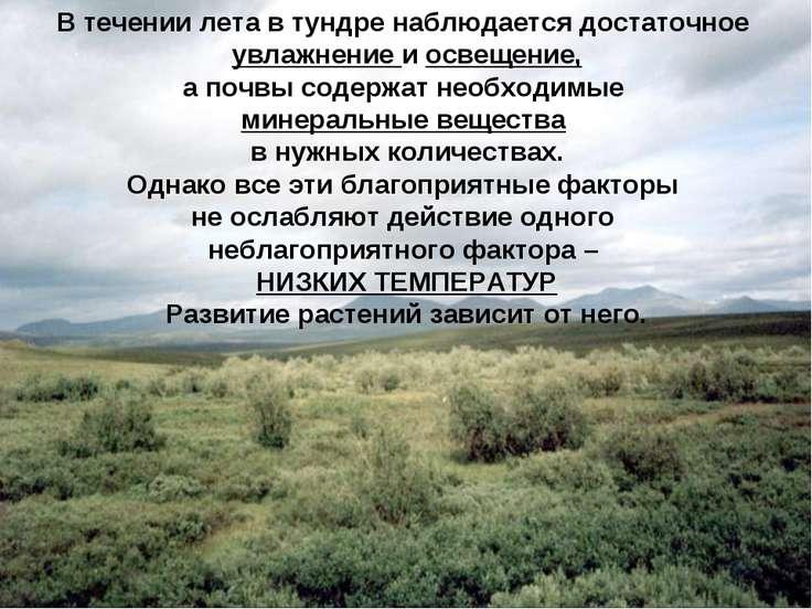 В течении лета в тундре наблюдается достаточное увлажнение и освещение, а поч...