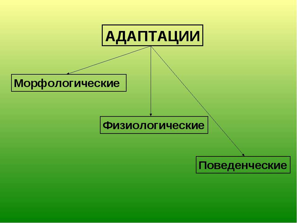 АДАПТАЦИИ Морфологические Физиологические Поведенческие