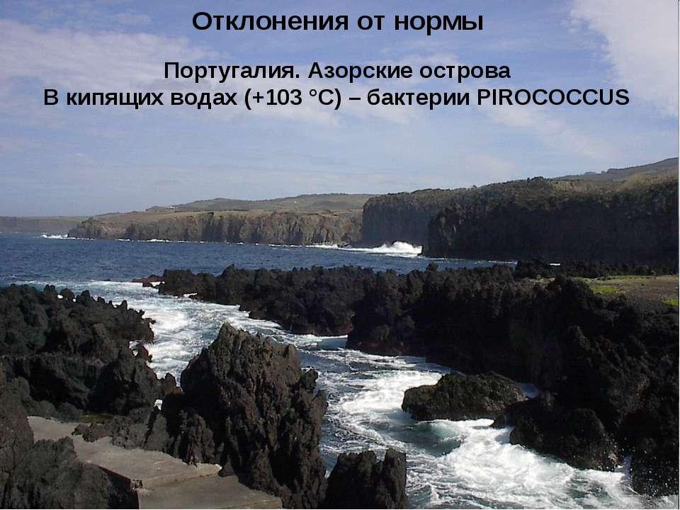 Отклонения от нормы Португалия. Азорские острова В кипящих водах (+103 °С) – ...