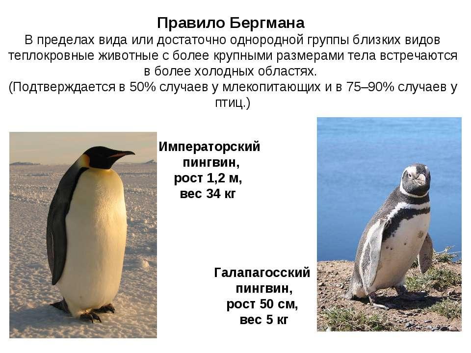 Правило Бергмана В пределах вида или достаточно однородной группы близких вид...