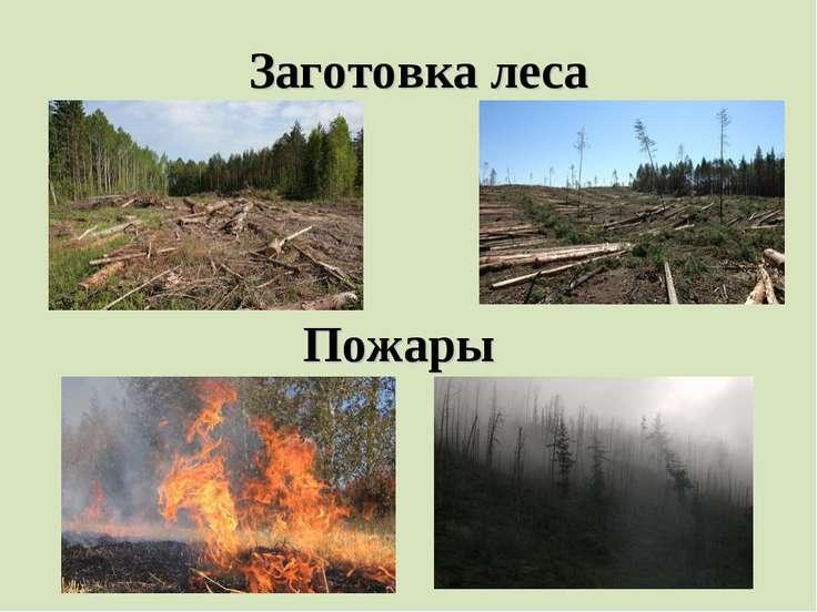 Заготовка леса Пожары