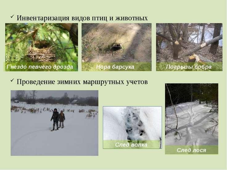 Инвентаризация видов птиц и животных Проведение зимних маршрутных учетов Гнез...