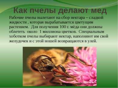Как пчелы делают мед Рабочие пчелы вылетают на сбор нектара – сладкой жидкост...
