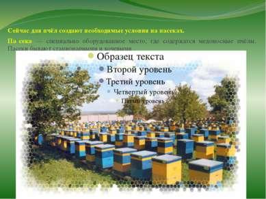 Сейчас для пчёл создают необходимые условия на пасеках. Па сека — специально ...