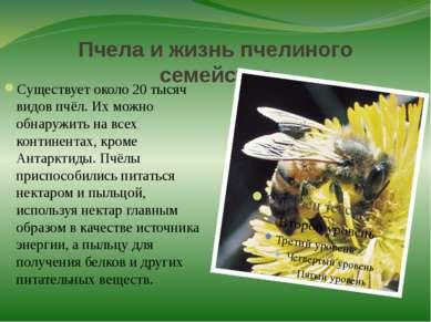 Пчела и жизнь пчелиного семейства Существует около 20 тысяч видов пчёл. Их мо...