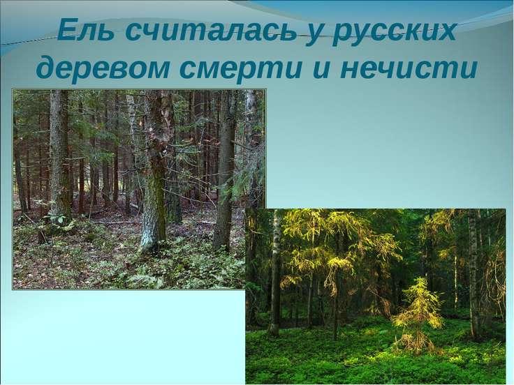 Ель считалась у русских деревом смерти и нечисти