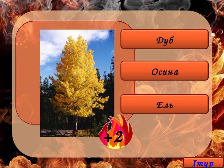 Из какого дерева делают спички?