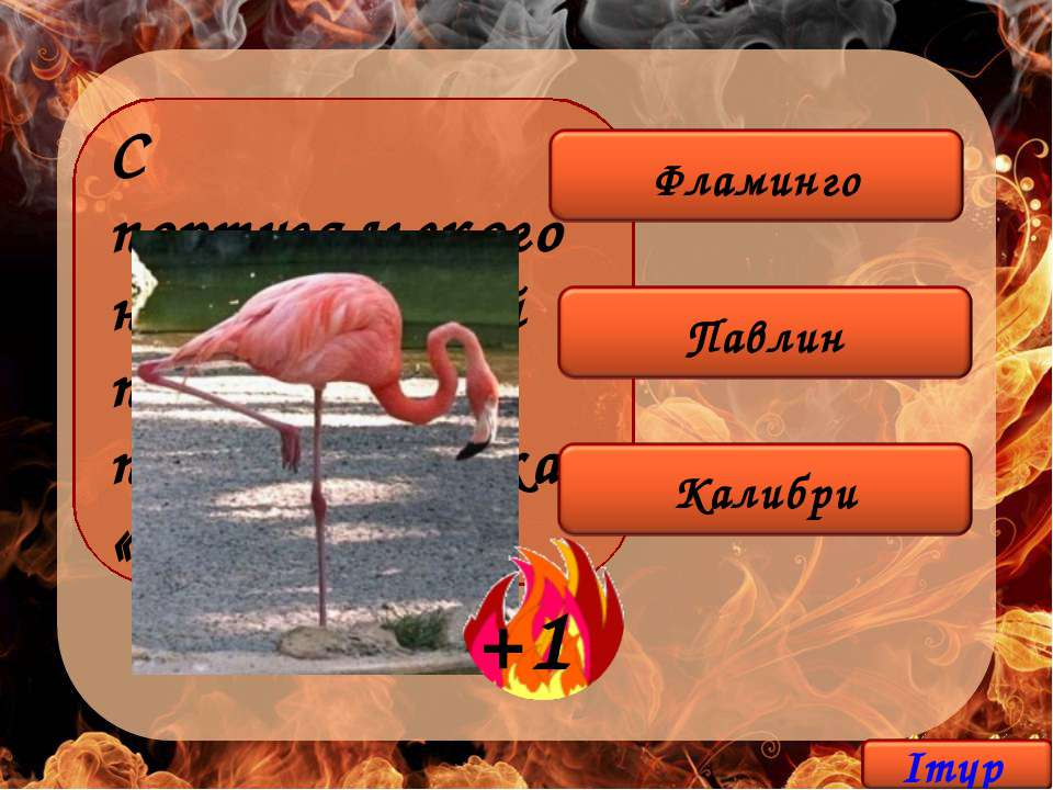 С португальского название этой птицы переводится как «огонь».