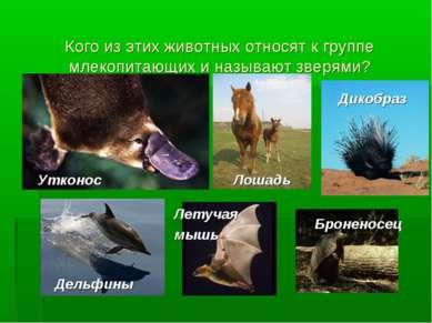 Кого из этих животных относят к группе млекопитающих и называют зверями? Утко...