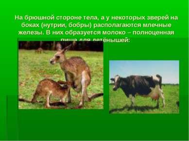 На брюшной стороне тела, а у некоторых зверей на боках (нутрии, бобры) распол...