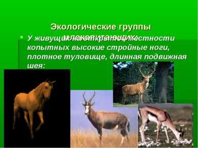Экологические группы млекопитающих: У живущих на открытой местности копытных ...