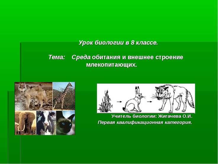 Урок биологии в 8 классе. Тема: Среда обитания и внешнее строение млекопитающ...
