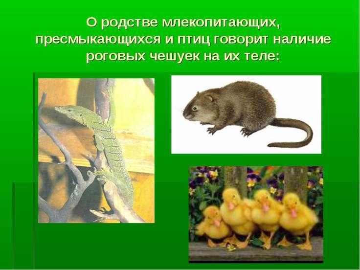 О родстве млекопитающих, пресмыкающихся и птиц говорит наличие роговых чешуек...