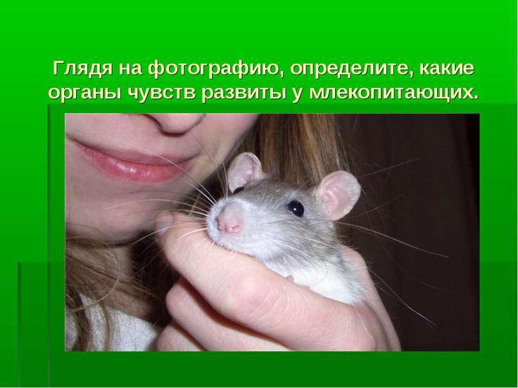 Глядя на фотографию, определите, какие органы чувств развиты у млекопитающих.