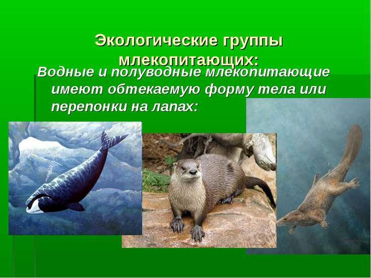 Экологические группы млекопитающих: Водные и полуводные млекопитающие имеют о...