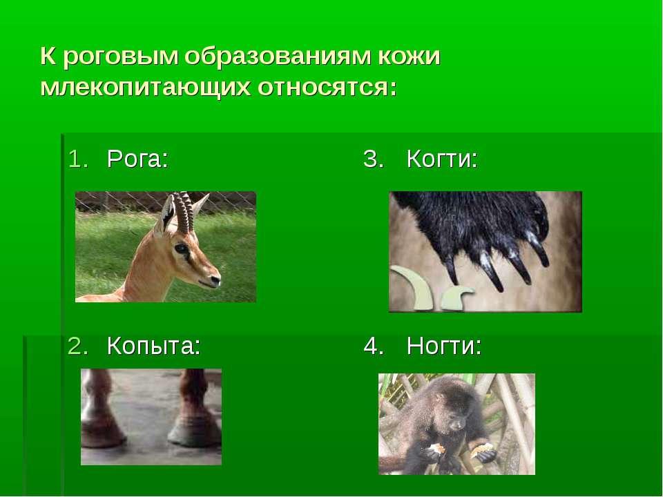 К роговым образованиям кожи млекопитающих относятся: Рога: Копыта: 3. Когти: ...