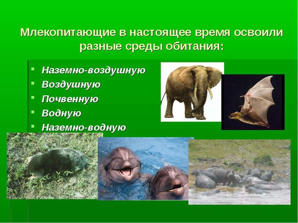 Млекопитающие в настоящее время освоили разные среды обитания: Наземно-воздуш...