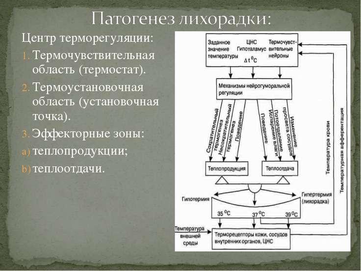 Центр терморегуляции: Термочувствительная область (термостат). Термоустановоч...