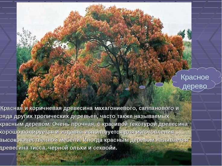 Красная и коричневая древесина махагониевого, саппанового и ряда других тропи...