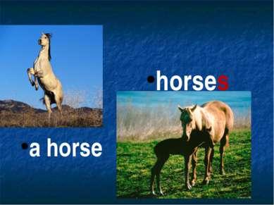 horses a horse