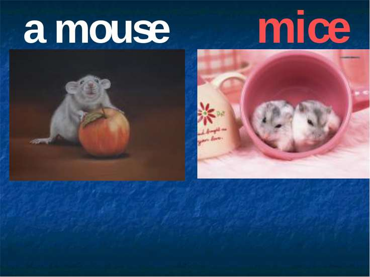 a mouse mice