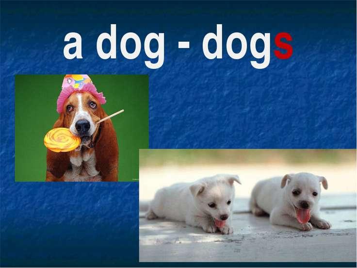 a dog - dogs