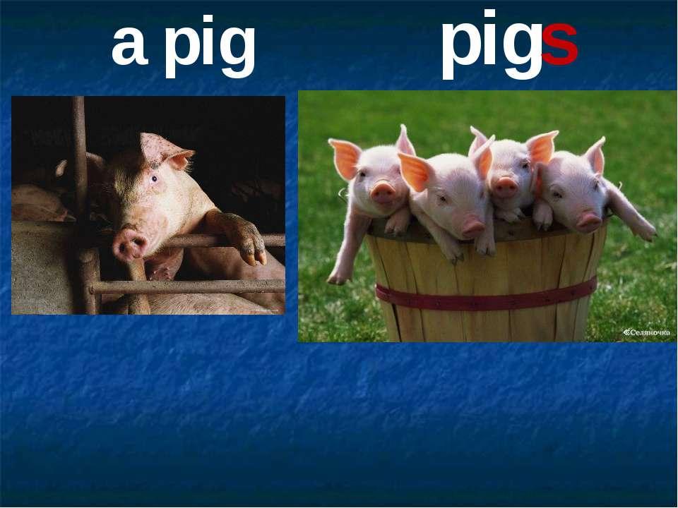 a pig pigs