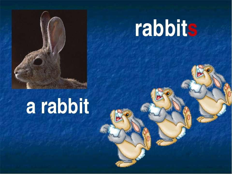 rabbits a rabbit