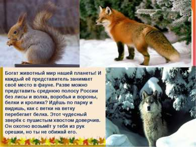 Богат животный мир нашей планеты! И каждый её представитель занимает своё мес...