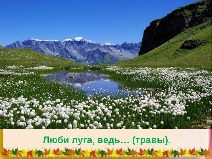 Люби луга, ведь… (травы).