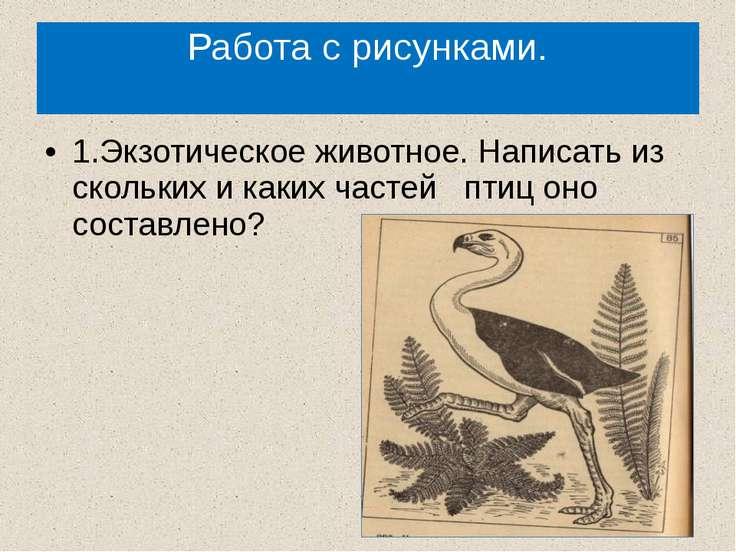 Работа с рисунками. 1.Экзотическое животное. Написать из скольких и каких час...