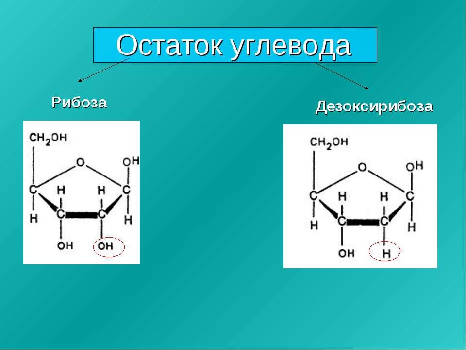 Остаток углевода Рибоза Дезоксирибоза