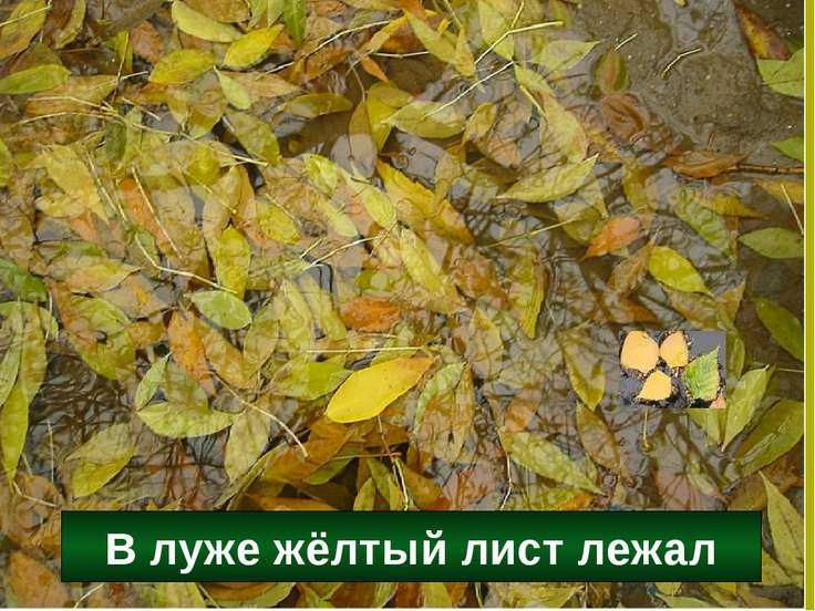 В луже жёлтый лист лежал
