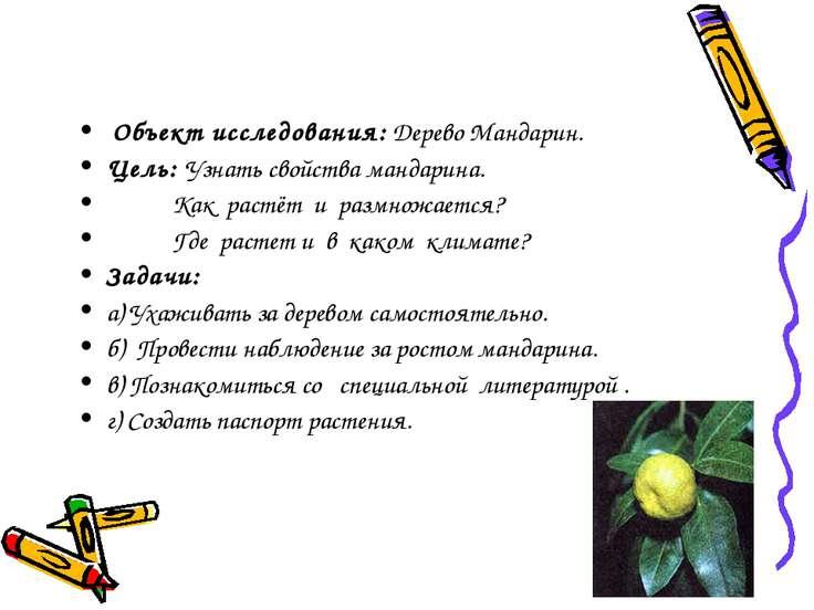 Объект исследования: Дерево Мандарин. Цель: Узнать свойства мандарина. Как ра...