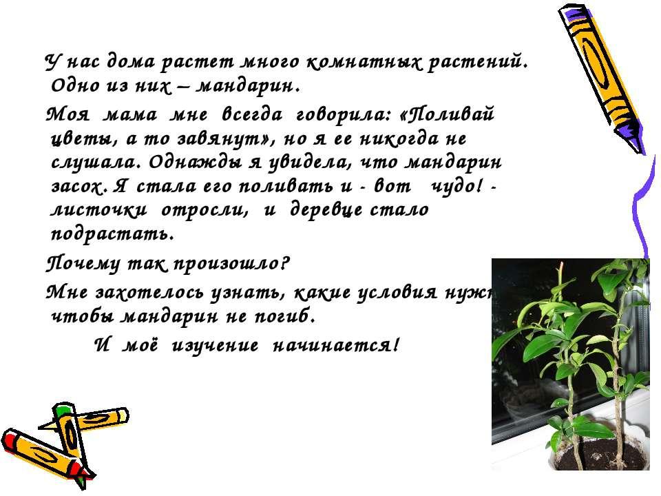 У нас дома растет много комнатных растений. Одно из них – мандарин. Моя мама ...