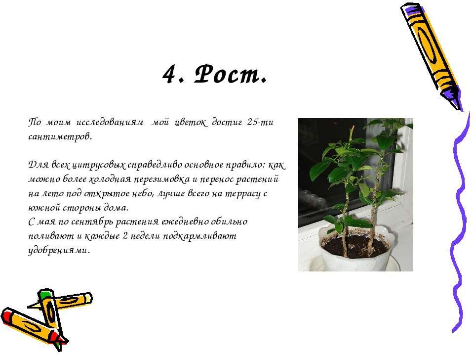 4. Рост. По моим исследованиям мой цветок достиг 25-ти сантиметров. Для всех ...