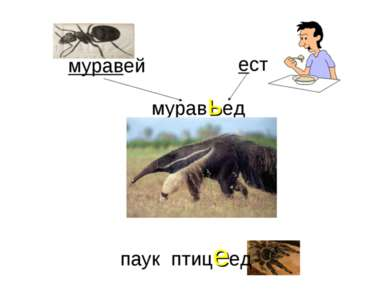 муравей ест муравьед паук птицеед