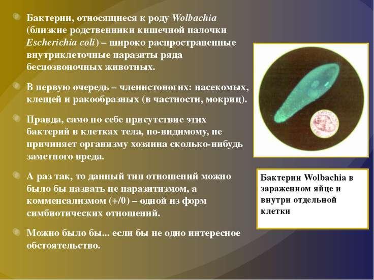Бактерии, относящиеся к роду Wolbachia (близкие родственники кишечной палочки...