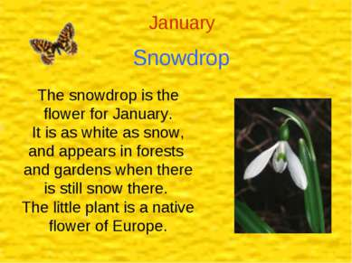 January Snowdrop The snowdrop is the flower for January. It is as white as sn...