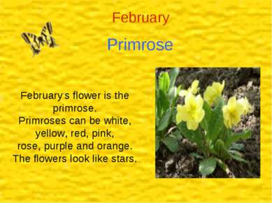 February Primrose February,s flower is the primrose. Primroses can be white, ...
