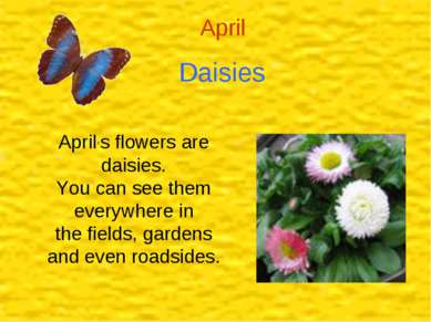 Daisies April April,s flowers are daisies. You can see them everywhere in the...