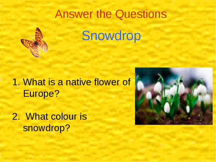 Answer the Questions Snowdrop What is a native flower of Europe? 2. What colo...