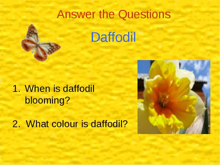Daffodil Answer the Questions When is daffodil blooming? 2. What colour is da...