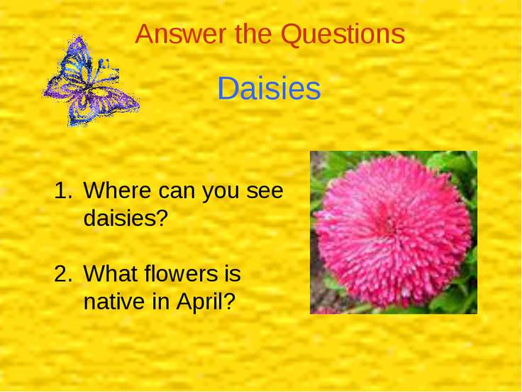 Daisies Answer the Questions Where can you see daisies? What flowers is nativ...