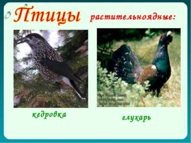растительноядные: глухарь кедровка