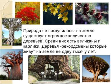Природа не поскупилась- на земле существует огромное количество деревьев. Сре...