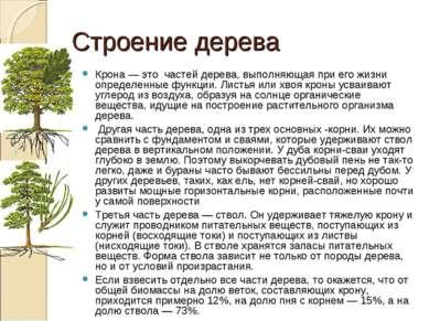 Строение дерева Крона — это частей дерева, выполняющая при его жизни определе...