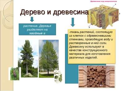 Дерево и древесина -многолетнее растение. Деревья разделяют на хвойные и лист...