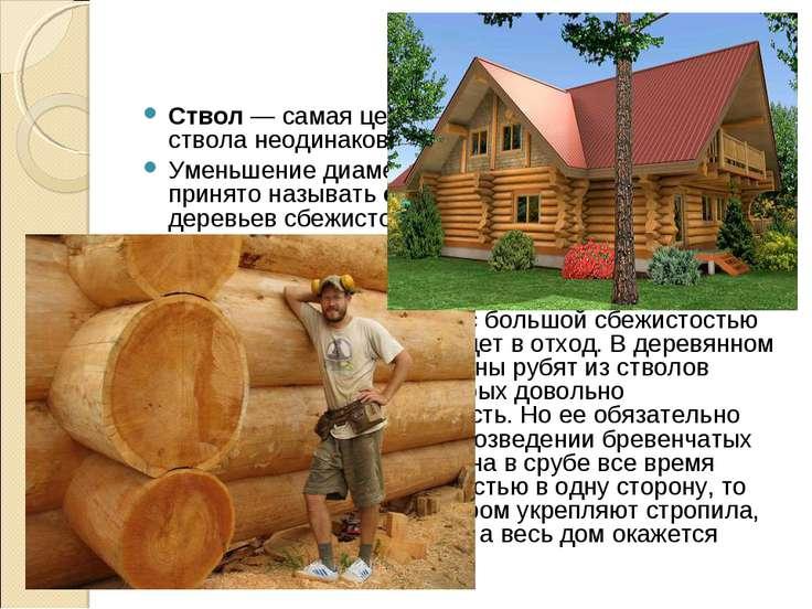 Ствол — самая ценная часть дерева. Толщина ствола неодинакова в разных его ча...