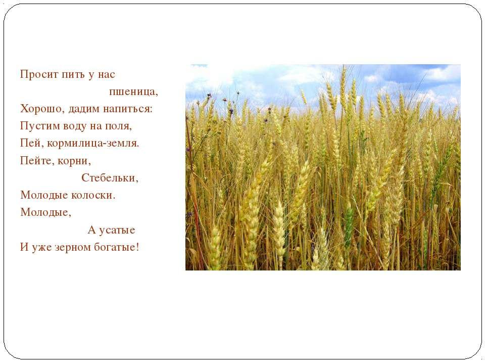 Просит пить у нас пшеница, Хорошо, дадим напиться: Пустим воду на поля, Пей, ...